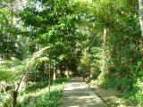 Penang Attraction Tips – Taman Metropolitan Awan RelauPark